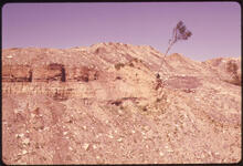 Erik Calonius - Lone Tree Struggles for Life Among Buttes Created by Coal Company Strip Mining Off Route #100 1974